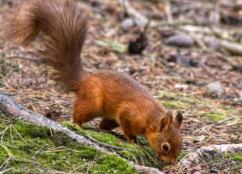Highly Commended - Stocking Up For Winter - Stephen Smith